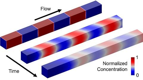 Chemical concentration gradients grow as fluidic segments flow in a microchannel.